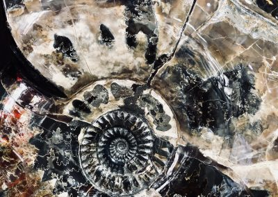 Fossil- Ammonite close up