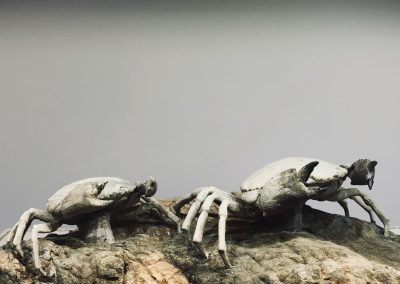 Fossil - Crabs