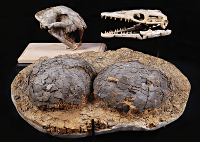 Lionshead Jewelers fossil