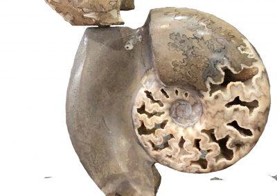 Fossil - Ammonites sculpture