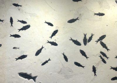 Fossil - Fish B_W